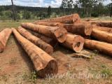 Red Ironbark, Narrow Leaf Logs, 30+ cm Girth Under Bark Diameter