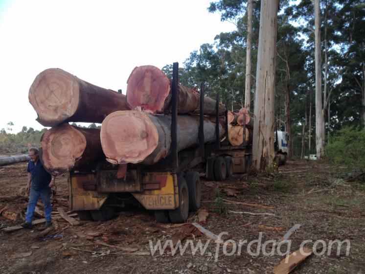 Vend Grumes De Sciage PEFC/FFC Western Australia Australie