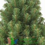 Volwassenbomen Te Koop - Koop Of Verkoop Van Hout Op Stam Op Fordaq - Rusland, Den - Grenenhout