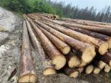 null - Spruce Industrial Logs(亚洲市场,BC,11.5米