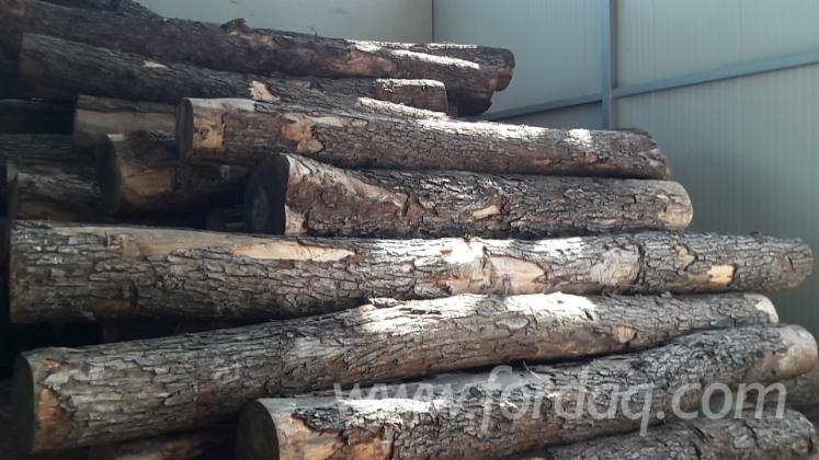 European-Elm-Logs