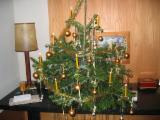 Volwassenbomen Te Koop - Koop Of Verkoop Van Hout Op Stam Op Fordaq - Oostenrijk, Nordmann Spar - Caucasian Spar