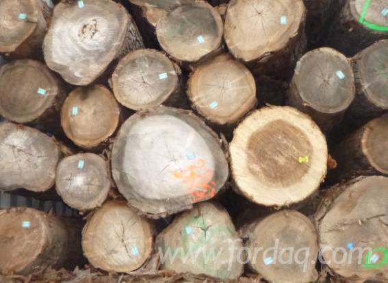 European Elm Logs Ab Grade