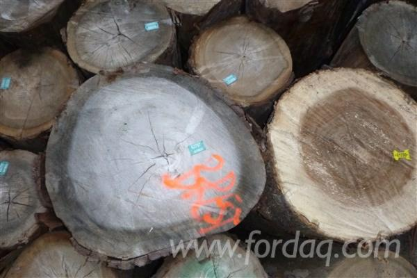 Euroepan-ELM-LOGS-%28available-near