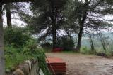 Ліс На Корню - Іспанія, Морська Сосна