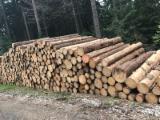 原木待售 - 上Fordaq寻找最好的木材原木 - 锯木, 苏格兰松, 云杉