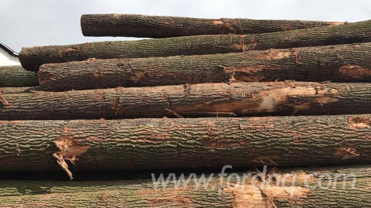 Saw-Logs--Brown-Ash--Beech