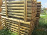 Wood Logs For Sale - Find On Fordaq Best Timber Logs - Stakes, Spruce