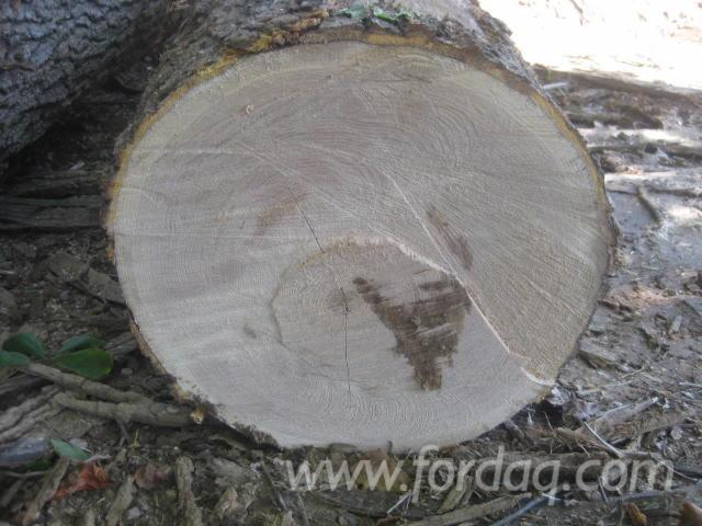 "Red Oak Saw Logs, 12""+"