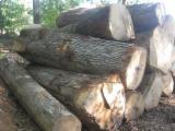 White Oak Veneer Logs