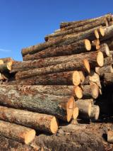 Find best timber supplies on Fordaq - Catskill Timber Ind., LLC - Hickory Saw Logs