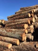 Forêts et Grumes - Vend Grumes De Sciage Caryer