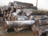 Find best timber supplies on Fordaq - Catskill Timber Ind., LLC - BLACK CHERRY SAW LOGS