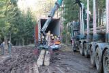 Wälder Und Rundholz - Schnittholzstämme, Fichte