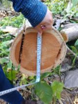 Šume I Trupce Sjeverna Amerika - Za Rezanje, Teak