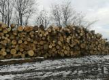 null - 27-100 cm Beech Saw Logs from Romania, GORJ