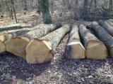 null - Suche Eiche Stammholz, Parkettholz