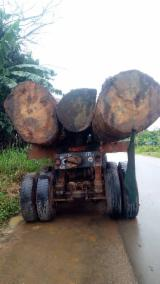 African Industrial Logs, Azobe/Iroko/Tali, 70 cm Diameter