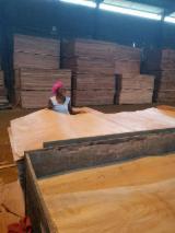 木皮供应网络 - 批发硬木木皮和热带木木皮 - 安哥拉丛花木, 旋切