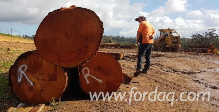Western-Australian-Native-Karri-Logs