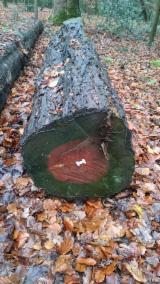 最大的木材网络 - 查看板材供应商及买家 - 疏松, 森林验证认可计划
