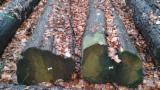 null - Sicheltanne - Stammholz - Abschnitte