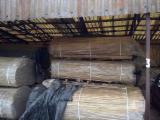 Platten Und Furnier - Eiche 18-19 mm Keilgezinkle Lamellen (Mehrteilige Lamellen) Europäisches Laubholz 1 Schicht Massivholzplatten Polen zu Verkaufen