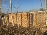 Drewno Opałowe - Odpady Drzewne - Buk Podpałka Niemcy