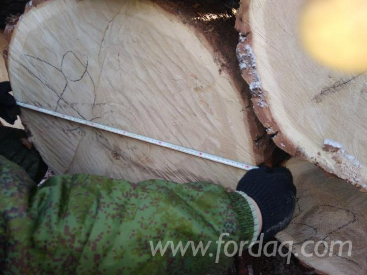 30-80 cm Mongolian Oak Saw Logs from Russia.