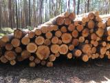 Troncos De Madera Aserrada En Venta - Fordaq - Venta Troncos Para Aserrar Pino Silvestre - Madera Roja Polonia