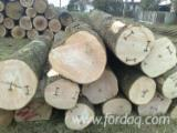 null - Schnittholzstämme, Esche , Esche
