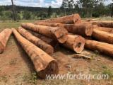 Forest And Logs - Red Ironbark, Narrow Leaf Logs, 30+ cm Girth Under Bark Diameter