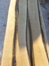 Pronađite najbolje drvne zalihe na Fordaq - Timberlink Wood and Forest Products GmbH - Samica,, Javor