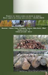 Forest and Logs - White Ash/ Oak Logs, 35-55 cm
