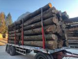 Hardwood Logs Suppliers and Buyers - 30+ cm Walnut Saw Logs Italy