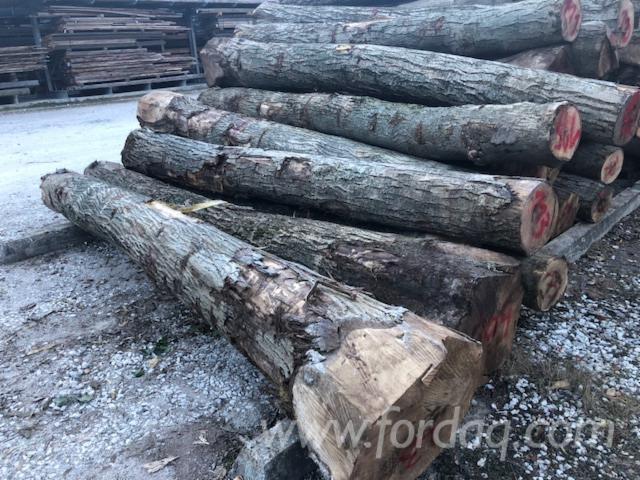 30+ cm Walnut Saw Logs Italy