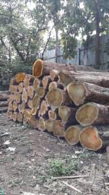 森林及原木 非洲 - 锯木, 柚木
