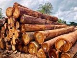 Find best timber supplies on Fordaq - YSK Korea Co.,Ltd. - Basralocus Saw Logs