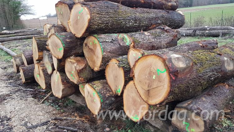 White Oak Logs, 30+ cm