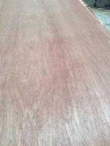 Find best timber supplies on Fordaq - Galahome Furniture Company Limited - 5/7/8/8.5/11/11.5/14/18 mm Commercial Plywood with Red Face from Vietnam Supplier