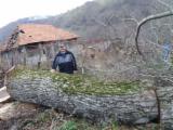 Forest and Logs - 45+ cm Walnut Saw Logs Romania