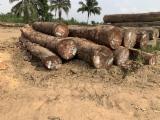 Stämme Für Die Industrie, Faserholz, Mahagoni