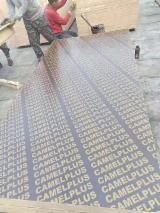 Vend Contreplaqué De Coffrage 9-21 mm Chine