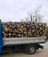 Firewood/Woodlogs Not Cleaved - Acacia Firewood/Woodlogs Not Cleaved