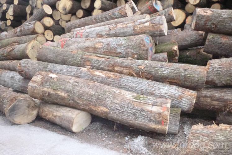 European oak logs: fine grain, quality for staves, barrels.