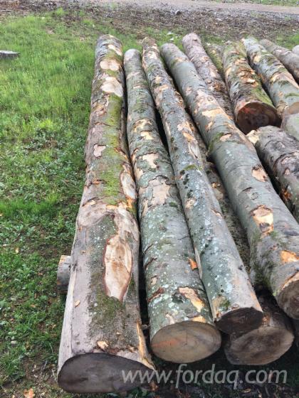 Stämme Für Die Industrie, Faserholz, Buche