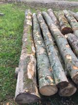 Hardwood Logs Suppliers and Buyers - 8-60 cm Beech Industrial Logs
