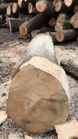 Schnittholzstämme, Esche , Eiche