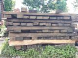 Forest And Logs South America - 20 cm width x 15 cm thickness cm Cumaru Square Logs from Colombia