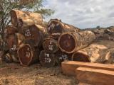 Wälder und Rundholz - Stämme Für Die Industrie, Faserholz, Saman